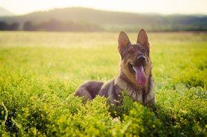 Kesztölci kutyák: frissítik a nyilvántartást, ellenőrzik a szabályok betartását